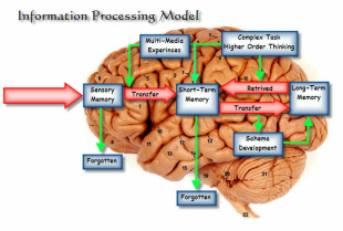 Info Processing Model
